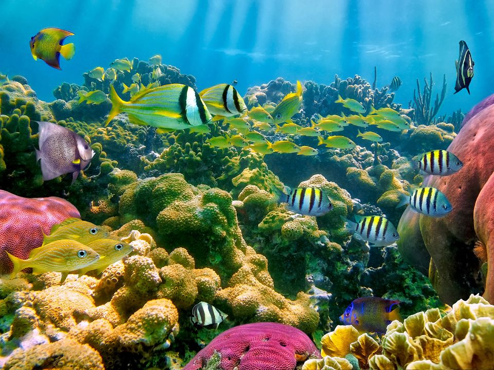 Corail-en-Guadeloupe